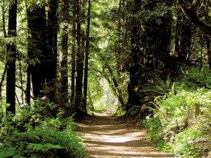 Nisene-Marks-Forest