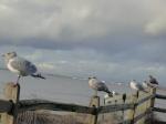 bird fence
